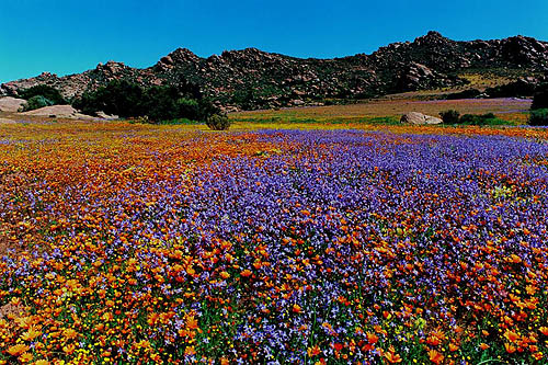 namaqualand_featured_5