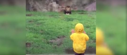 lion and kid