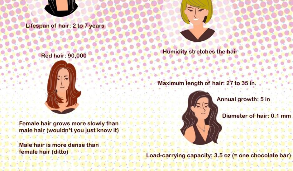 fun-hair-facts_529713aecb7ef_w1500