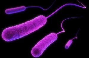 irreducible-complexity-e-coli_472_308_80