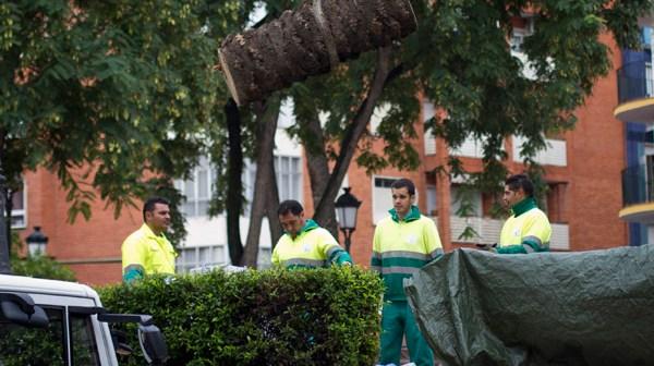 Operarios municipales recogen parte del tronco. (Julián Pérez)