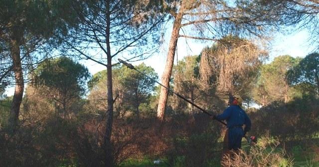 Limpieza de montes en Aljaraque.