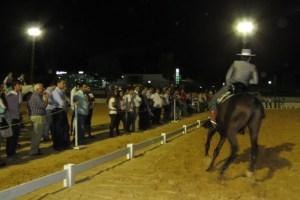 Concurso de Doma Vaquera en Moguer.