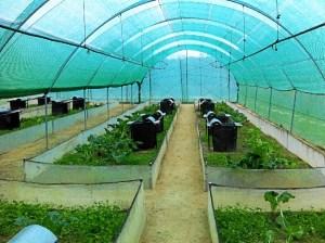 Granja de caracoles en Bonares.