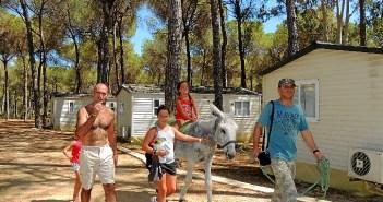 burros camping-932