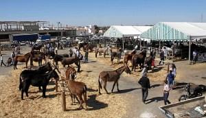 Feria del Caballo Cartaya (5)