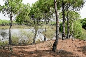 Laguna del Portil