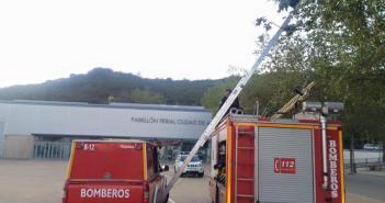 bomberos de aracena retiran un enjambre de abejas (2)