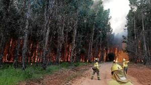 incendio en fuente de la corcha en beas provincia de Huelva (1)