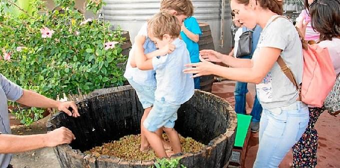 actividades-en-andalucia-vinos
