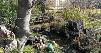 Destrozo vivero Parque Moret4