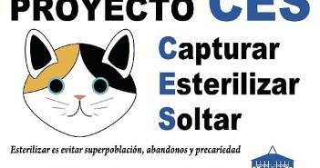 salud-ces-gatos