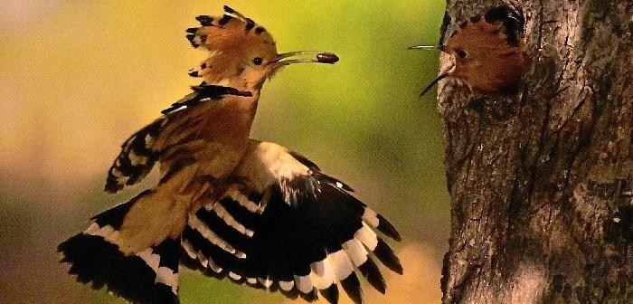 exposicion de avifauna