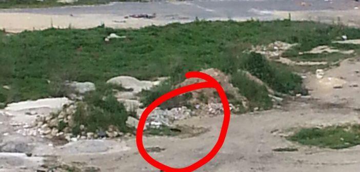 Matan a un gato con disparos de perdigones en Huelva (4)