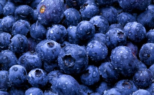 blueberries_541x360