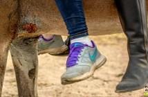 maltrato-animal-el-rocio2015-38