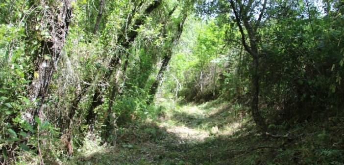 Camino limpiado sin glifosato en Almonaster la Real
