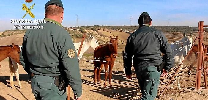 Maltrato animal caballo en Lucena del Puerto (2)