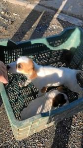 cachorros abandonados aljaraque