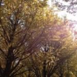 秋の空の下で