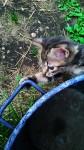 Krevette à la bassine