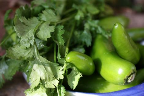 hot green peppers and coriander
