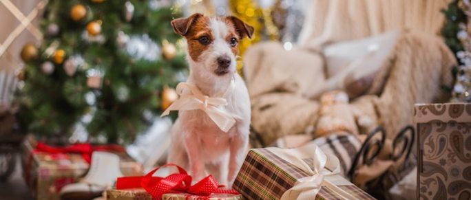 Der Hund unter dem Weihnachtsbaum | © panthermedia.net /averyanova