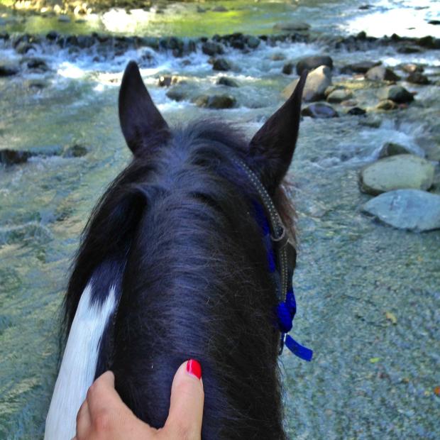 horse-backriding-rive