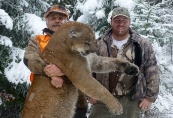 montana mountain lion hunts