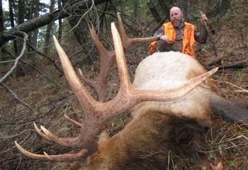 Bull elk hunt 2013