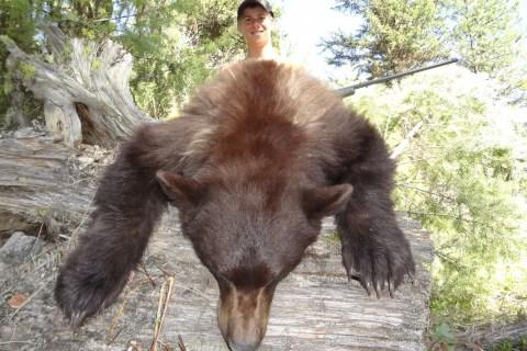 Black Bear Hunts 2013