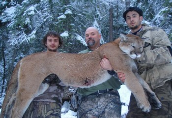 cougar hunts montana