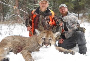 Mountain Lion hunting 2011