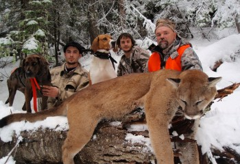 Montana guided cougar hunts