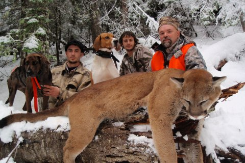 Mountain Lion Hunts 2010 & before