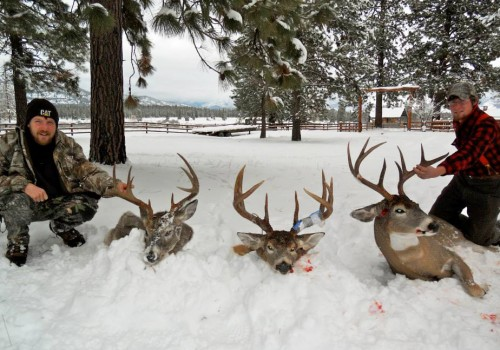 Montana Whitetail Deer Outfitter