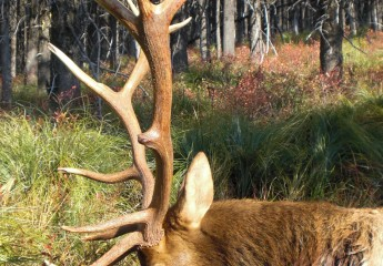 Elk hunts with Cody Carr 2008 (2)