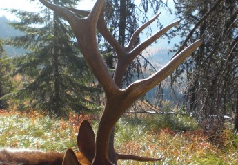 Elk hunts with Cody Carr 2008 (3)