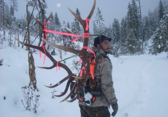 elk hunts montana 2010 (10)