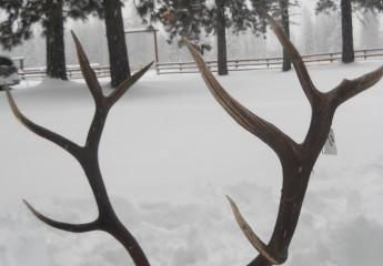 elk hunts montana 2012 (4)
