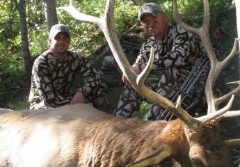 elk hunts montana 2012 (7)