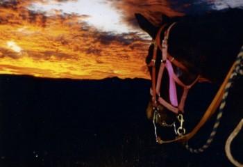 horseback riding 2005