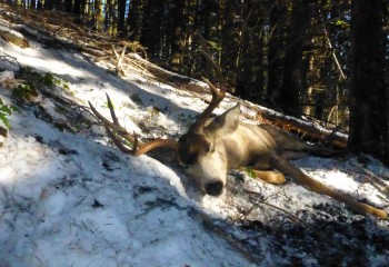 mule deer hunts 13 (6)