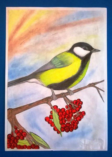 Синичкин день - картинки, рисунки для детей и прикольные раскраски на 12 ноября 2020