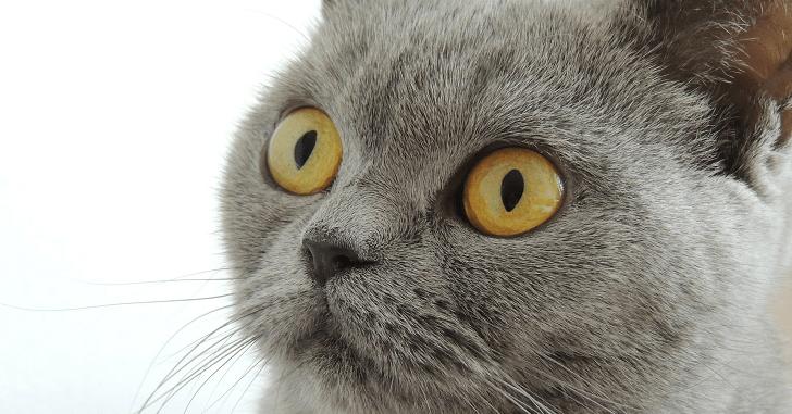 デリヘルの講習の9つの流れを猫でも分かる様に教えます!