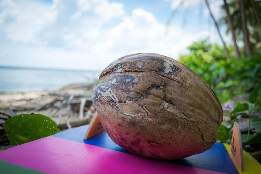 Prvý Chomčom otvorený kokos...mňam1