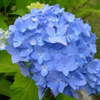 Some of My Blue Flower Pictures