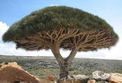 planta estranha