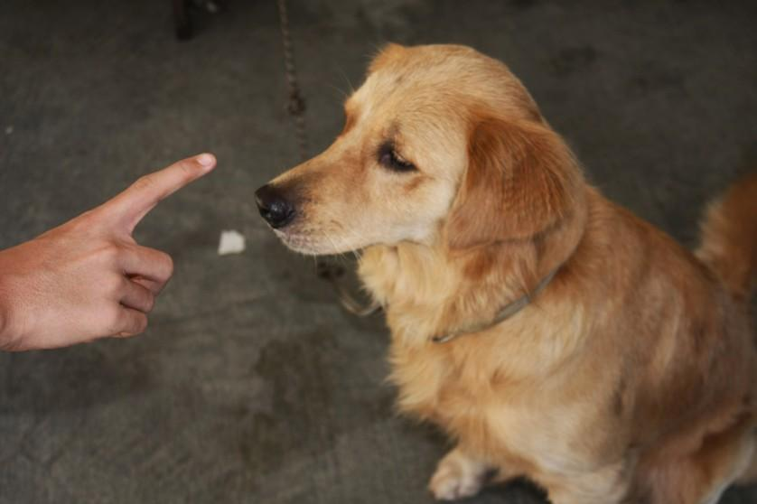 Saiba quais são os 5 grandes erros que donos de cachorro cometem