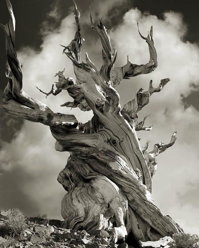 vecchi alberi 15